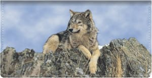 Defenders of Wildlife Wolves Checkbook Cover – click to view product detail page